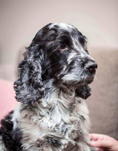 Onze-hond-Basile